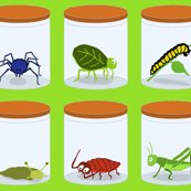 Bugs_in_jars_green_shop_thumb