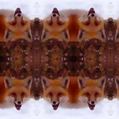 fox_face_5