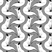 Arctic Foxes on Gray