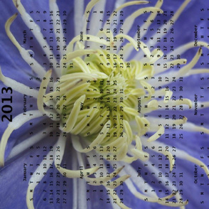 2013 Calendar -Flowers - Blue &amp; White Spider Chrysanthemums