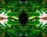 Rainforestpatternmirror_thumb