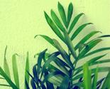 Rplants_polaroin_ed_thumb
