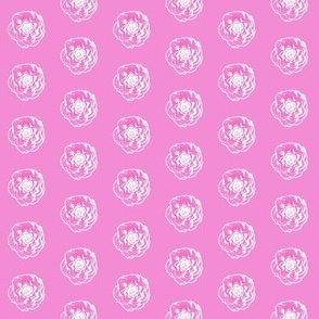 Camellia sketch