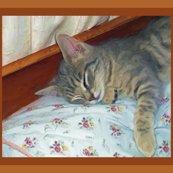 Rzippy_sleeping_31814_resized_shop_thumb
