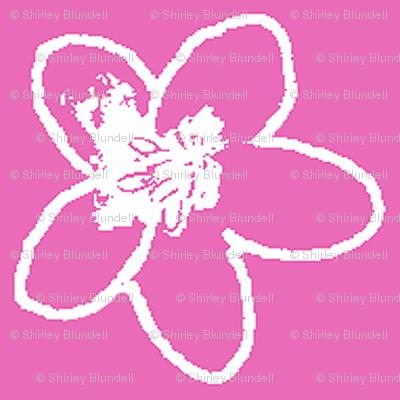 Plumeria Sketch