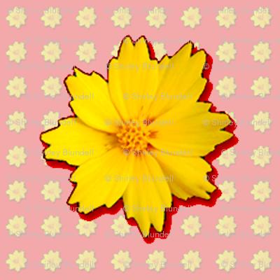 Coreopsis Pattern