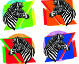 White_zebra_with_pics_thumb