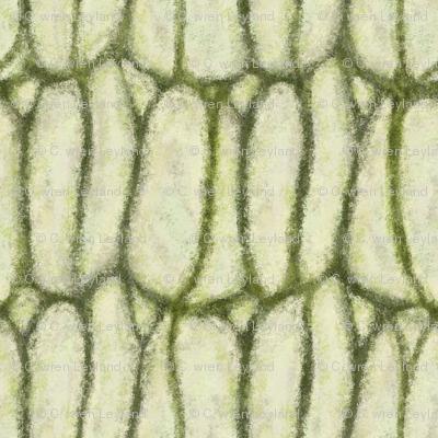 olive-branch-1800