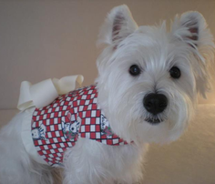 Westie_chef_flowers_red_4x4_comment_452242_thumb