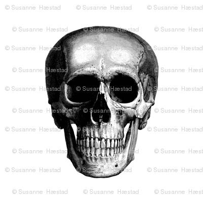 """skull 13"""""""