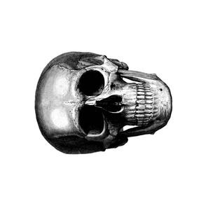 """skull 12"""""""