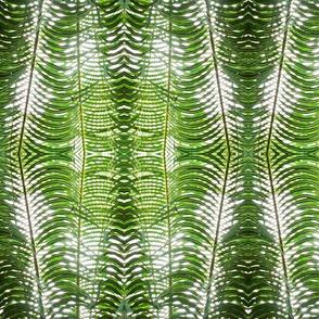 green_pal...