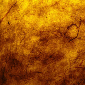 Parchment Yellow
