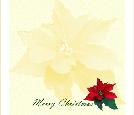 Cocktail_Napkins_Poinsettia by Sylvie