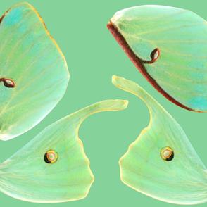 Oversized Luna Moth Costume Wings