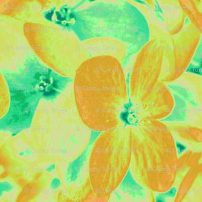 Lucile's hydrangeas - yellow & green #1