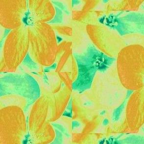 Lucile's hydrangeas - yellow & green #1