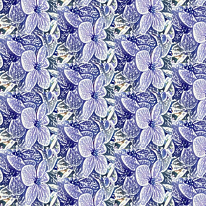 Lucile's hydrangeas - lavender white edge