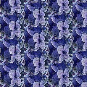 Lucile's hydrangeas - lavender black edge