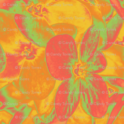 Lucile's hydrangeas - yellow & orange #2