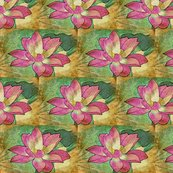 Rwater_lily__2_shop_thumb