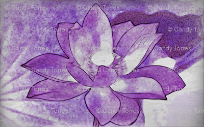 water lily #4