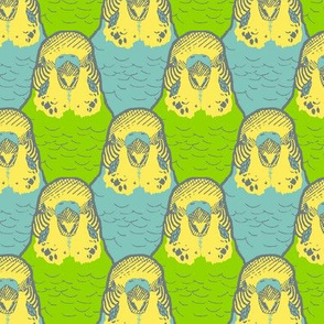 A Buncha Budgies