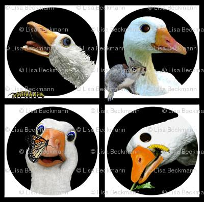 Oliver Sebastopol Diapered Goose