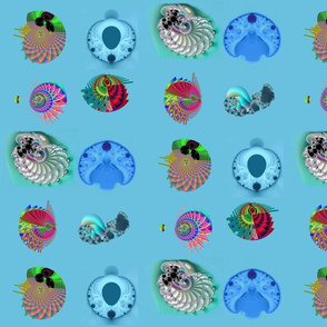 Fractal Seashells