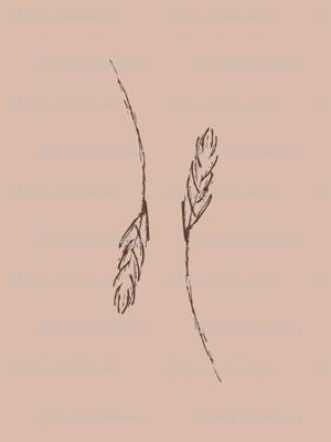 wheat1_pink