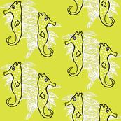 Seahorse Key Lime Dance
