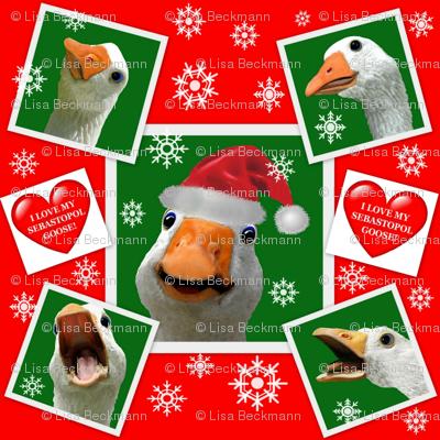 Sebastopol Goose HOLIDAY Wrapping Paper Gift Wrap