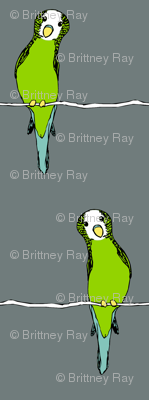 Parakeets on Grey