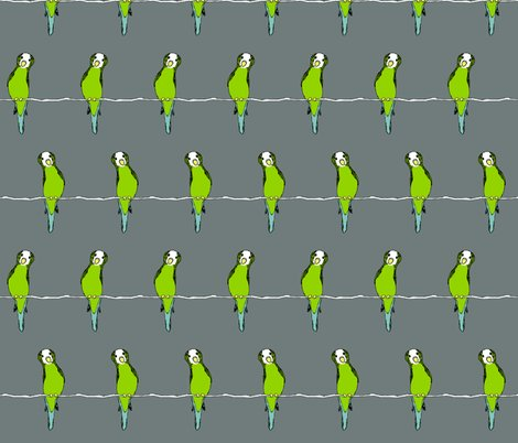Rr1406790_rparakeets_on_whgrey_shop_preview
