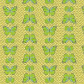 Rcocoon_butterflies_lemon_shop_thumb