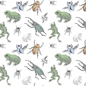 beetles and frogs