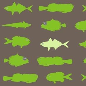 Green Fish Funk