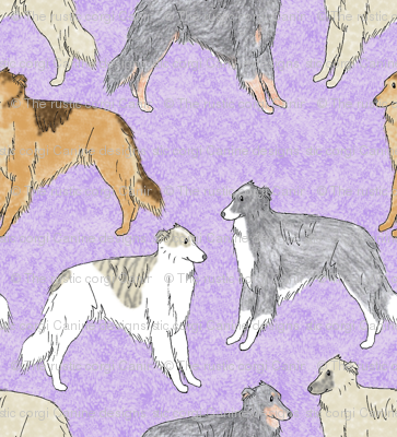 Standing Long haired Whippets - purple