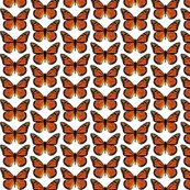 Rbutterfly-monarch_shop_thumb