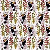 Rtoucan_step_for_spoon_shop_thumb