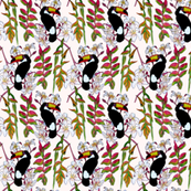 Toucans_in_the_Pink.