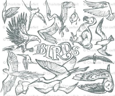 Birds Grey
