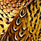 Fall pheasant beige 