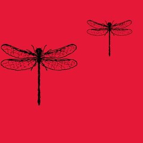 The Black and Red Dragonfly