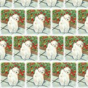 Rrhavanese_poppies_vignette_shop_thumb