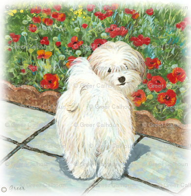 Havanese Dog & Poppies