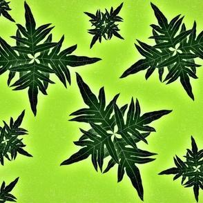 Lauae fern limegreen