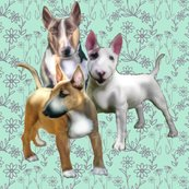 1591245_rbull_terriers_shop_thumb