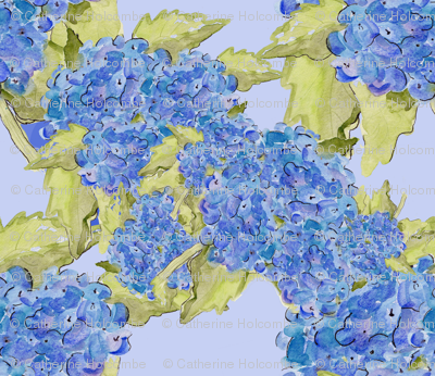 Blue Hydrangeas on Blue