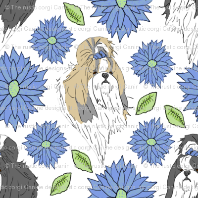 Shih Tzu and Chrysanthemum - blue